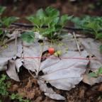 Organic Food Journey (Ep. 2)