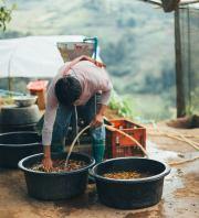 พี่วัฒน์กำลังสาธิตการทำความสะอาดเมล็ดกาแฟ